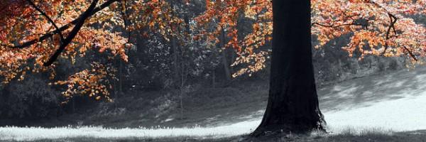 arbre-par-Magraiveur-Marc-600x200