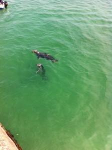 J'avais peur de rentrer dans l'eau…