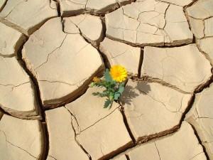 fleur-sol-craquele-desseche-desert