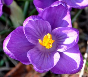 Je suis comme cette fleur montrant son plus bel épanouissement Par bobosh_t